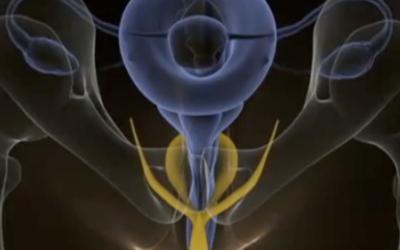Es posible que aún no conozcas el tamaño de tu clítoris