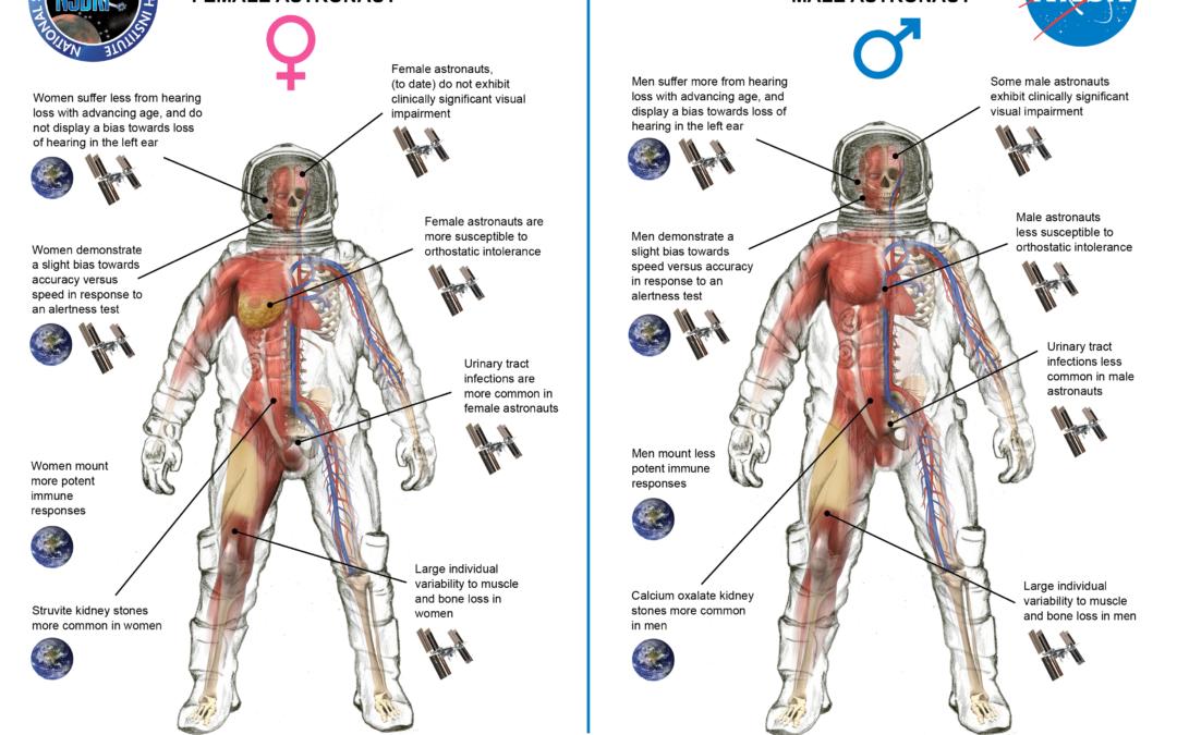 ¿Qué diferencias hay entre un «austranauto» y una astronauta?